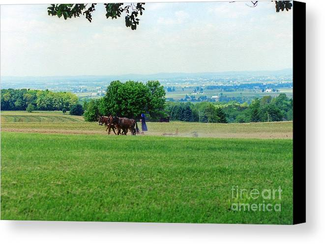 Amish Canvas Print featuring the photograph Lady Plowing In Field by Wayne Nielsen