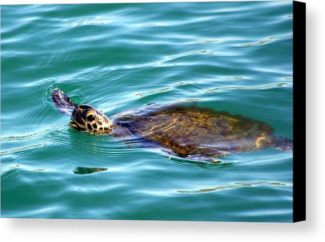 Canvas Print featuring the photograph Sea Turtle by Jeanne Andrews