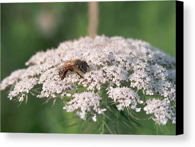 Bee Canvas Print featuring the photograph 070406-76 by Mike Davis