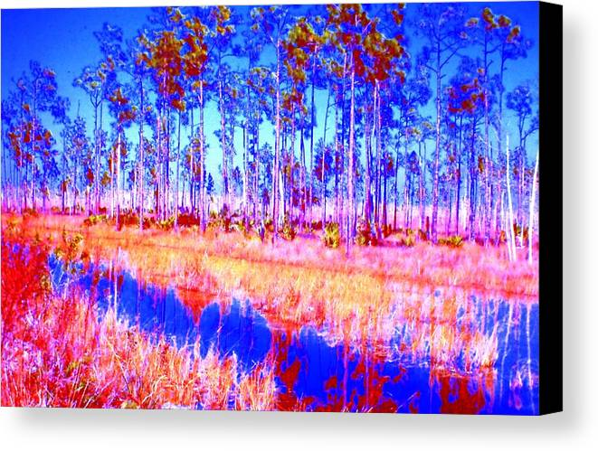 Trees Water Everglades Canvas Print featuring the photograph Everglades by Lucrecia Cuervo