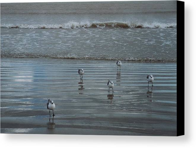 Birds Canvas Print featuring the photograph Padre Island Shore Birds by Wendell Baggett