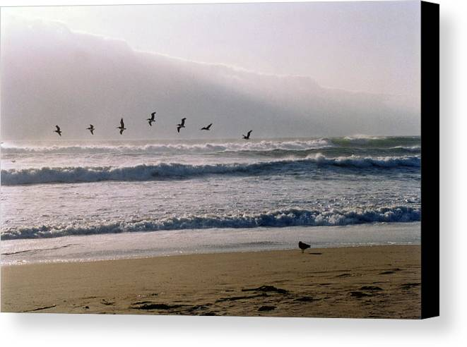 Seascape Canvas Print featuring the photograph Pelican Brief by Brande Barrett