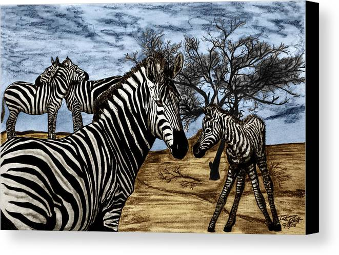 Zebra Outback Canvas Print featuring the drawing Zebra Outback by Peter Piatt