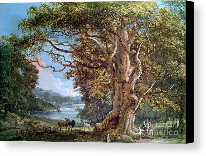 Ancient Canvas Print featuring the painting An Ancient Beech Tree by Paul Sandby