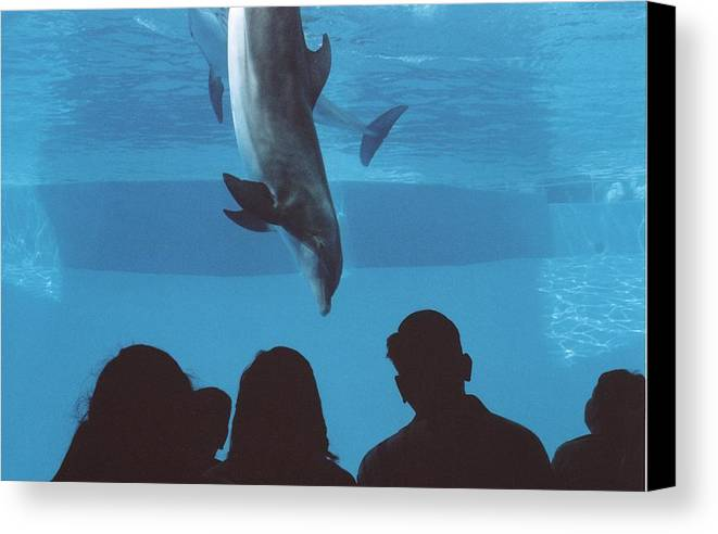 Dolphin Canvas Print featuring the photograph Aquarium Dolphin by Wendell Baggett
