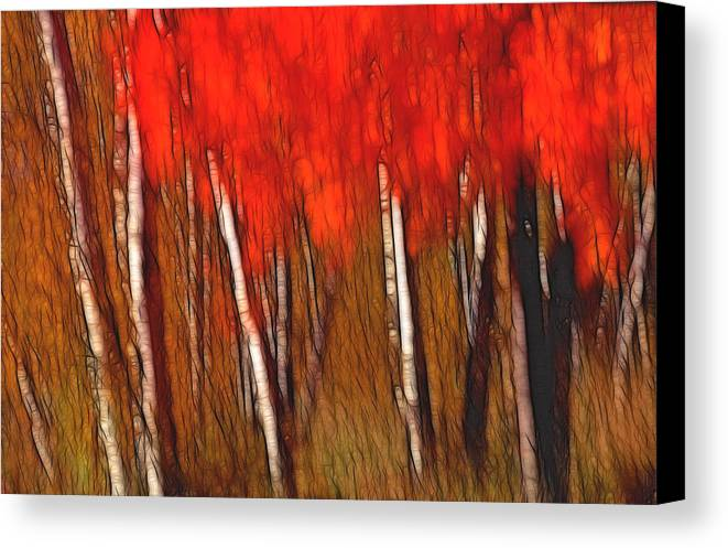 Trees Canvas Print featuring the photograph Autumn Fire by Bill Morgenstern