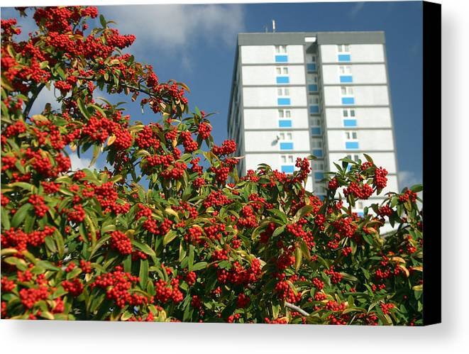 Jez C Self Canvas Print featuring the photograph Berry The Future by Jez C Self