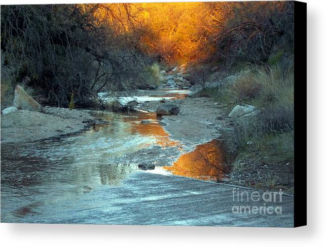 Saguaro National Park Canvas Print featuring the photograph Desert Reflections by Jerry Bokowski