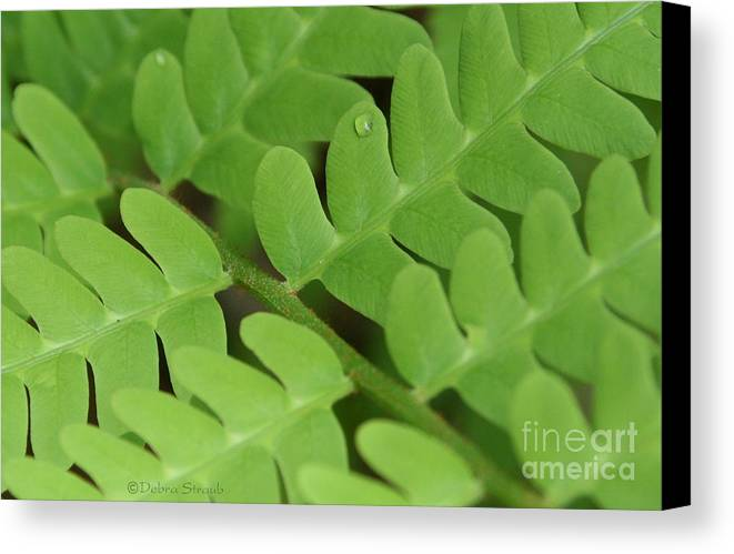 Fern Canvas Print featuring the photograph Droplet On Fern by Debra Straub
