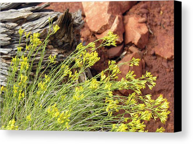Flower Canvas Print featuring the photograph Flower Wood And Rock by Marilyn Hunt