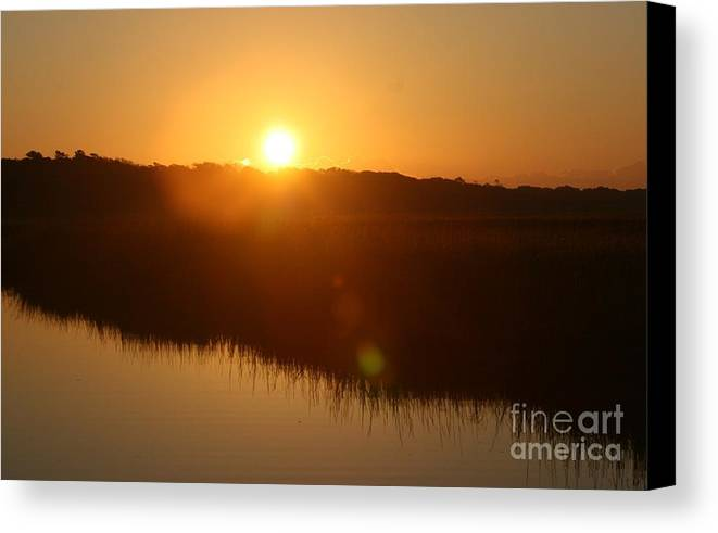 Glow Canvas Print featuring the photograph Gold Morning by Nadine Rippelmeyer