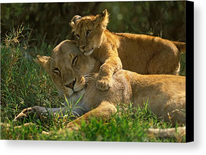 Africa Canvas Print featuring the photograph I Love My Mother by Johan Elzenga