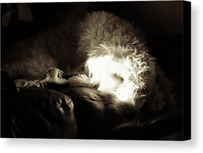 Canvas Print featuring the photograph Light As He Tries To Sleep by Cary Leppert