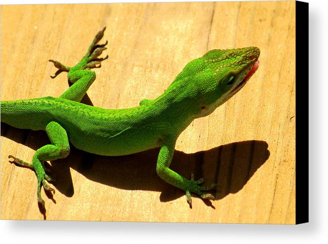 Anole Canvas Print featuring the photograph Lizzy Snack by Trudi Southerland