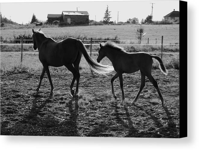 Black Canvas Print featuring the photograph Mother And Baby by J D Banks