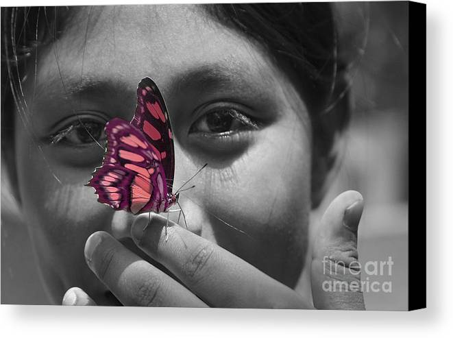 Butterfly Canvas Print featuring the photograph Nosey by Katherine Morgan