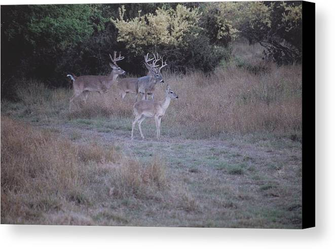 Deer Canvas Print featuring the photograph Private Ranch 4 by Wendell Baggett