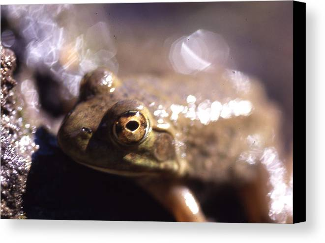 Canvas Print featuring the photograph Ribbit by Curtis J Neeley Jr