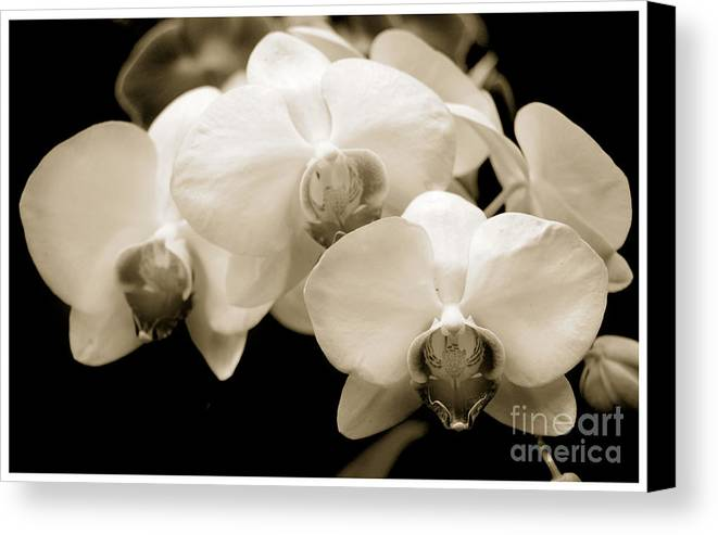 Beauty Flower Canvas Print featuring the photograph Threesome by Son Of the Moon