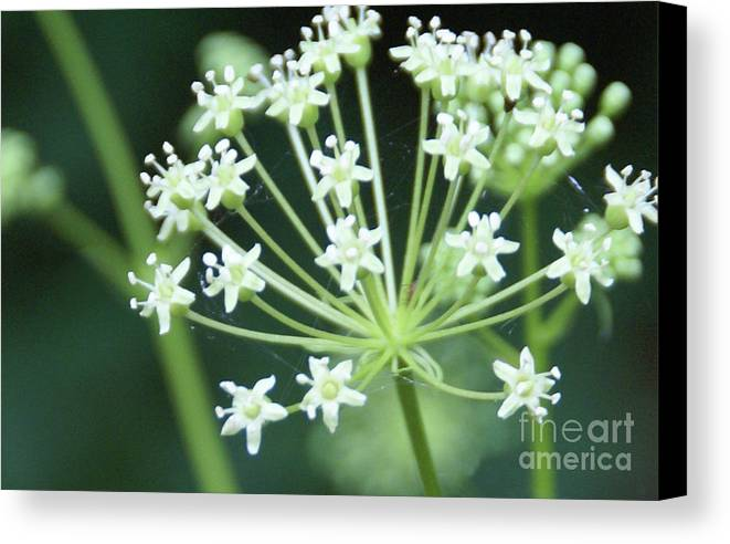 Flower Canvas Print featuring the photograph Web Design - 2 by Linda Shafer