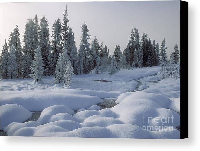 Yellowstone Canvas Print featuring the photograph West Thumb Snow Pillows by Sandra Bronstein