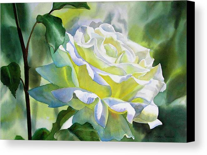White Canvas Print featuring the painting White Rose With Yellow Glow by Sharon Freeman