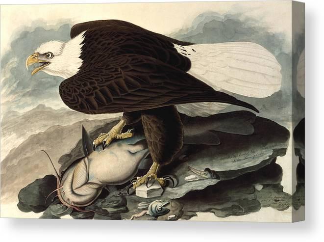 Audubon Canvas Print featuring the painting Bald Eagle by John James Audubon