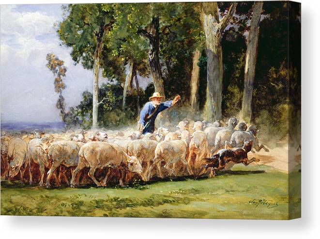 A Shepherd With A Flock Of Sheep Canvas Print
