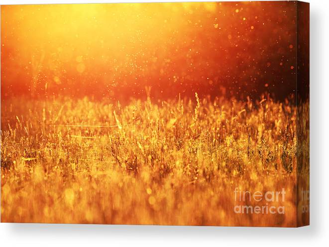 Lawn Canvas Print featuring the photograph Dusk Mood by Sorin Rechitan