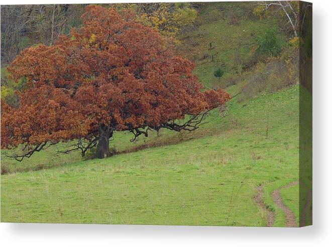 Galena Fall Canvas Print featuring the photograph Galena 16 by Todd Sherlock