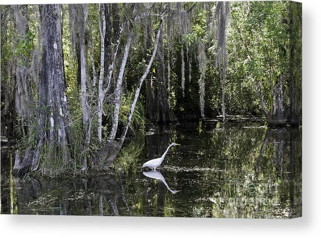 Scenic Canvas Print featuring the photograph Lone Egret by Bruce Bain