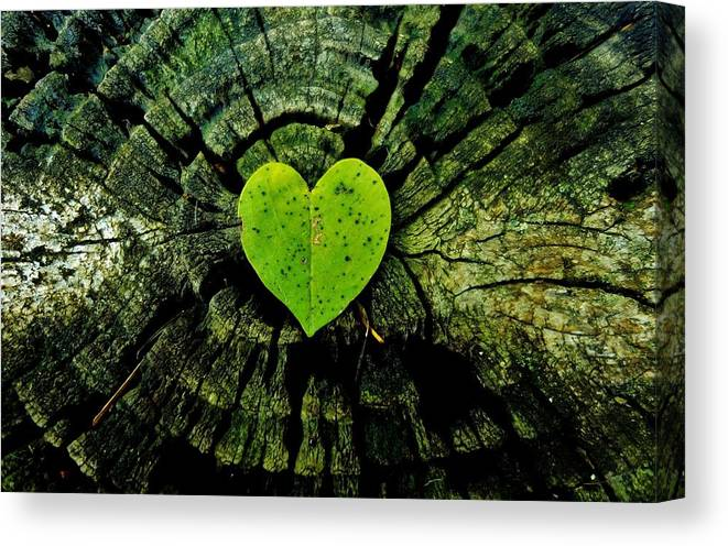 Heart Canvas Print featuring the photograph Love Nature by Sarah Pemberton