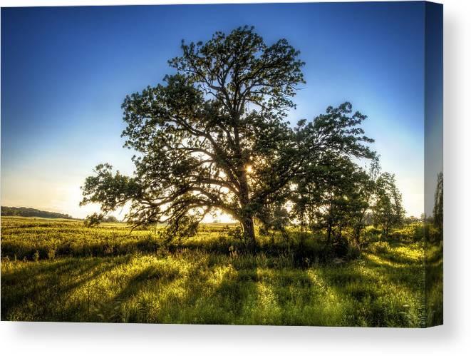 Sunset Canvas Print featuring the photograph Sunset Oak by Scott Norris