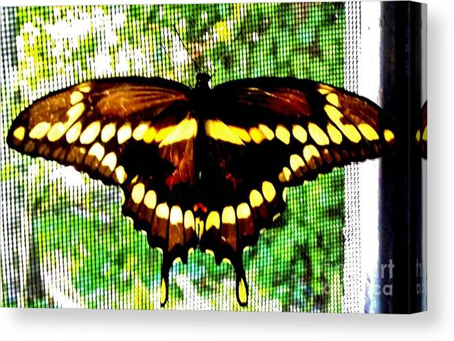 Wildlife Canvas Print featuring the photograph Temporary Guest by Lori-Anne Fay