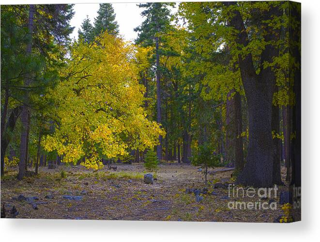 Fall Canvas Print featuring the photograph Turning For Autumn by Fred Ziegler