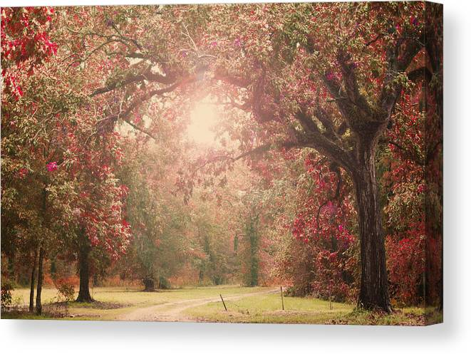 Enchanted Canvas Print featuring the photograph Autumn Splendor by Southern Tradition
