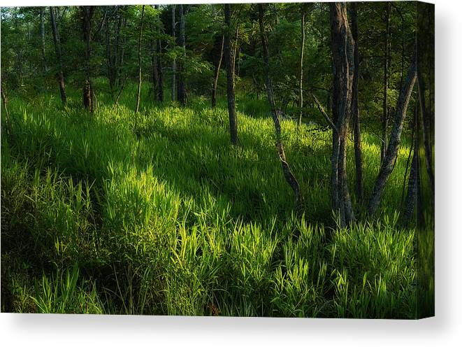 Forest Canvas Print featuring the photograph 10 by Greg Ferrell