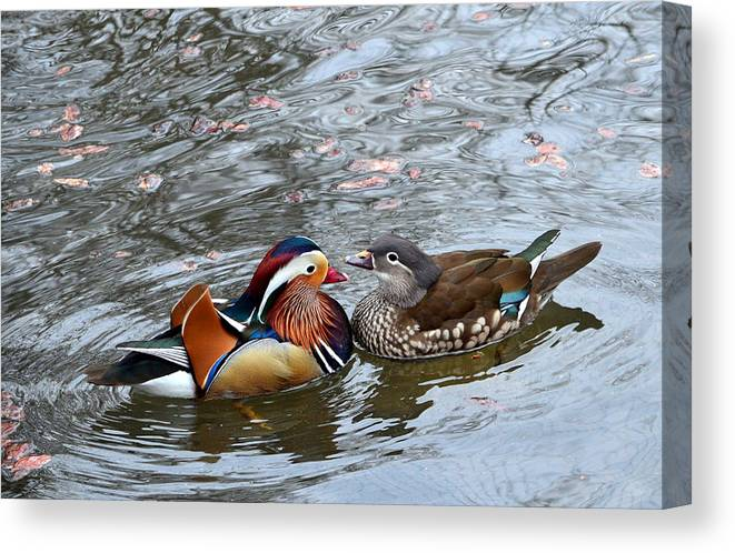 Animal Canvas Print featuring the photograph Duck Love by Taras Bekhta