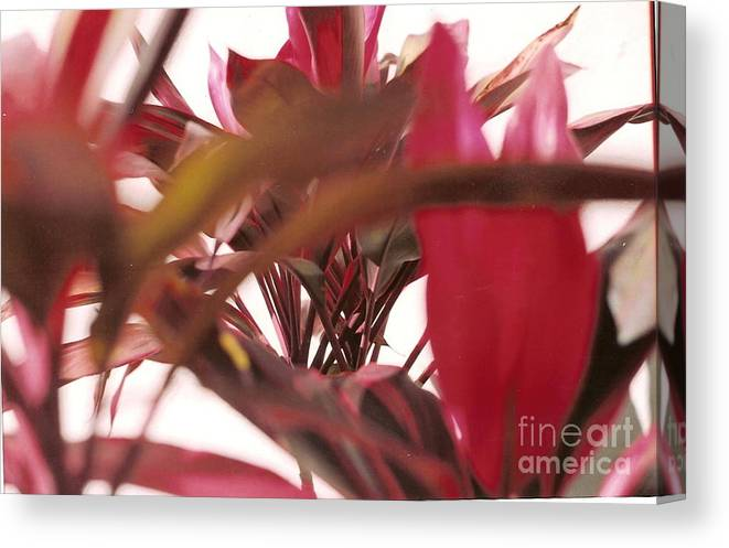 Nature Canvas Print featuring the photograph Focus by Robyn Leakey
