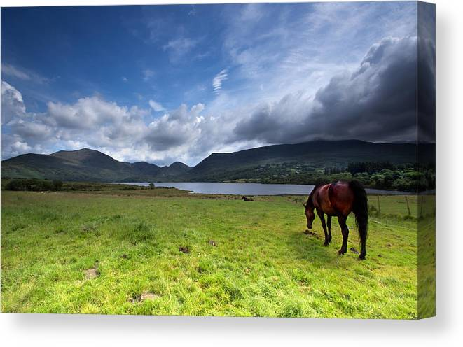 Scenery Canvas Print featuring the photograph Grazing by Celine Pollard