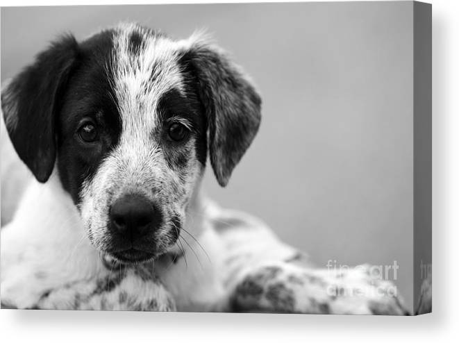 Dog Canvas Print featuring the photograph Keep Me by Amanda Barcon