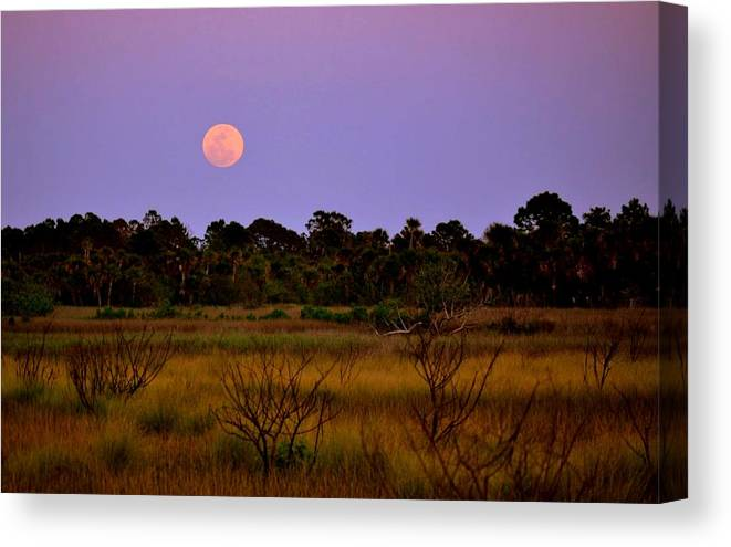 Moon Canvas Print featuring the photograph Moon Over The Refuge by Jennifer A Garcia