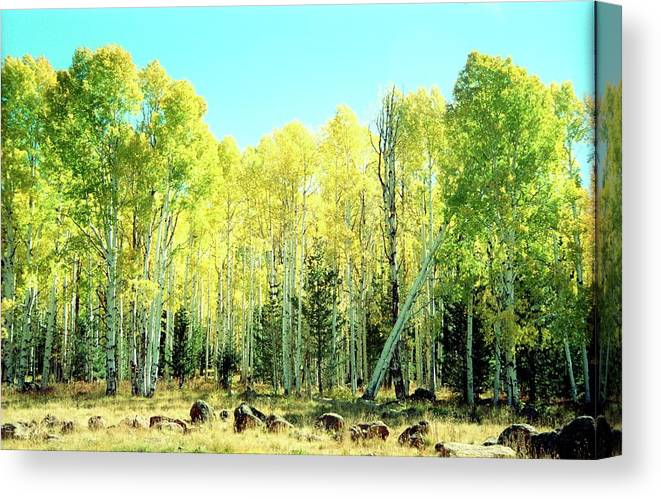 Aspen Canvas Print featuring the photograph One Drunk Tree by Richard Henne