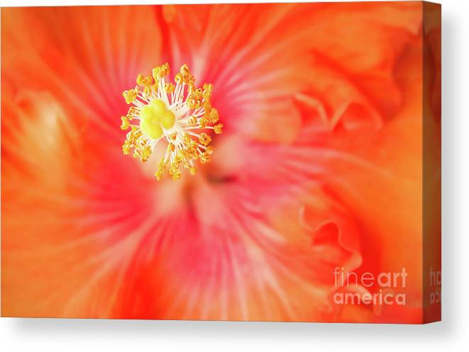 Hibiscus Canvas Print featuring the photograph Sacred Song by Sharon Mau