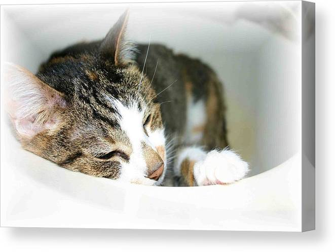 Cat Canvas Print featuring the photograph Sweet Dreams by Nelson Strong