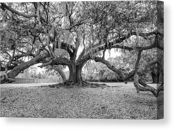New Orleans Canvas Print featuring the photograph The Tree Of Life Monochrome by Steve Harrington