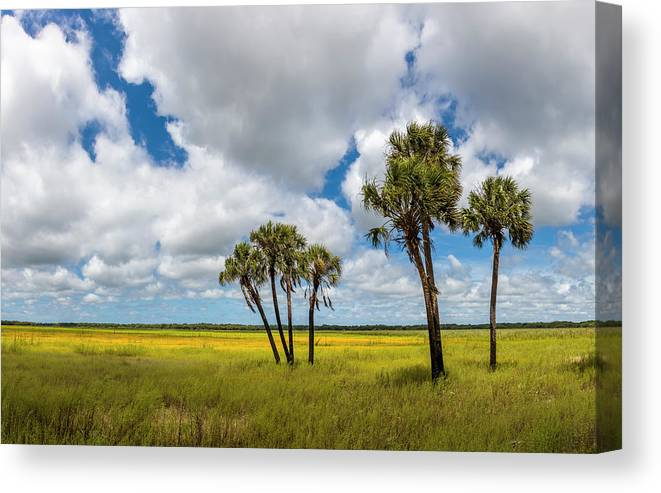 Photography Canvas Print featuring the photograph Palm Trees In The Field Of Coreopsis by Panoramic Images