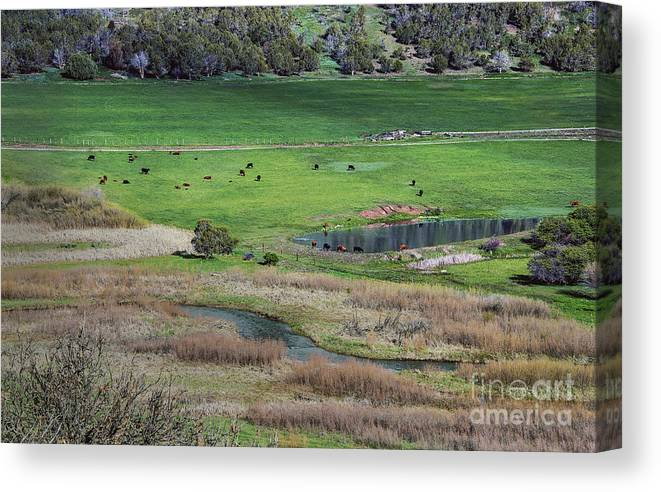 Peaceful Farm Canvas Print featuring the photograph Peaceful Farm by Mae Wertz