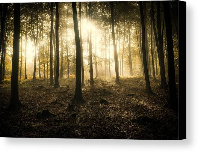 Kings Canvas Print featuring the photograph Kings Wood In Autumn by Ian Hufton