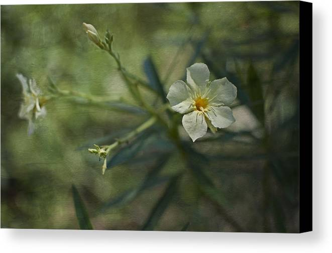 Flowers Canvas Print featuring the photograph ... by Mario Celzner